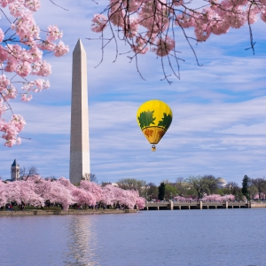 Spuds at Washington Monument